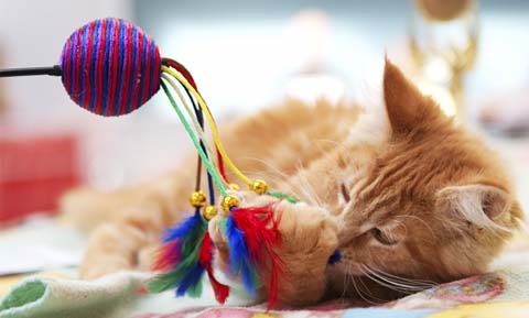 Behavior Management Products for Cats