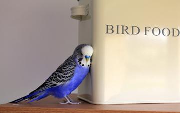 Egg Binding in Birds | VCA Animal Hospital