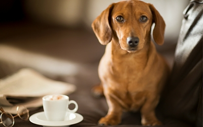 Caffeine Toxicity in Pets