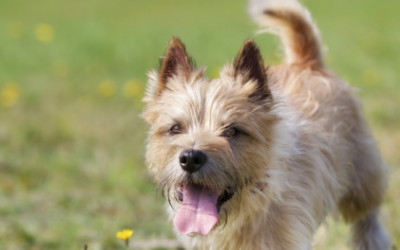 Polycystic Kidney Disease in Dogs