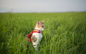 Where the Green Grass Grows: Grass Treats for Cats