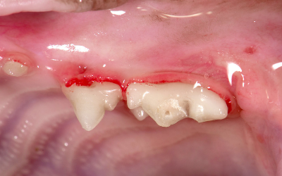 Fractured Teeth in Cats