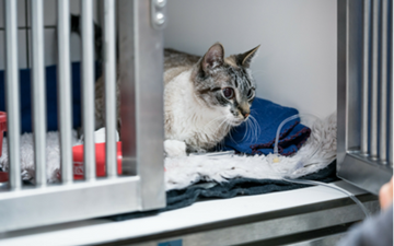 Diarrhea in Cats | VCA Animal Hospital