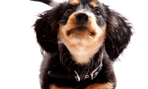 Cystitis in Dogs