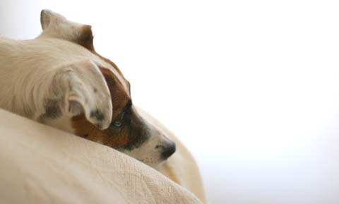 Do Dogs Mourn?