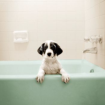 Personal Care Products and Your Pet