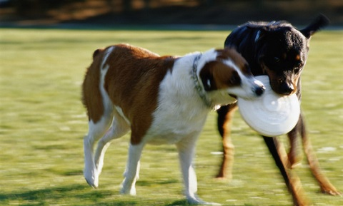 Dog Behavior and Training - Play and Exercise