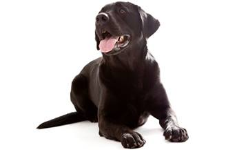 Dog Behavior and Training - Teaching Calm - Settle and Relaxation Training