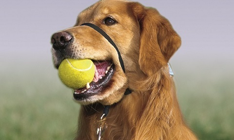 Dog Behavior and Training - Training Products - Head Halter Training - Synopsis
