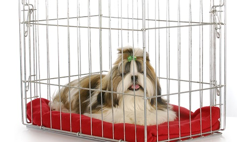 Reasons to Crate Train Your Dog