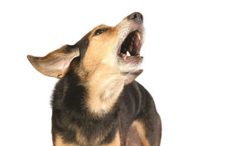 Teaching Your Dog to Stop Barking on Command