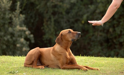 Dog Behavior Problems - Aggression to Family Members - Introduction and Safety