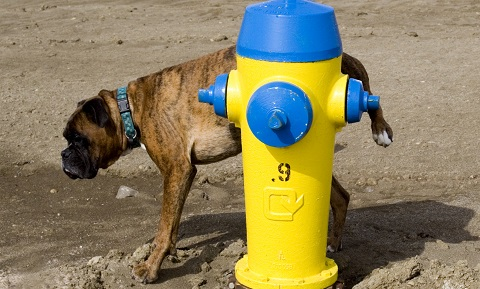 Dog Behavior Problems Marking Behavior