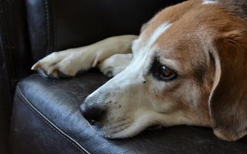 Gastroenteritis in Dogs | VCA Animal Hospital
