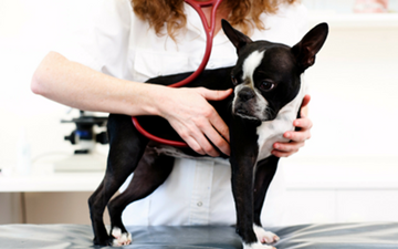 Wellness Examination in Dogs