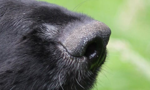 Why Dogs Sniff Butts