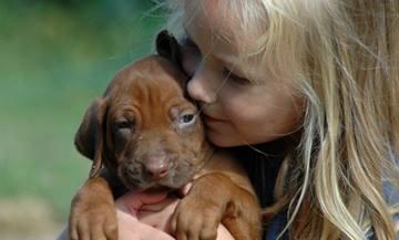 Essential Oil and Liquid Potpourri Poisoning in Dogs | VCA Animal