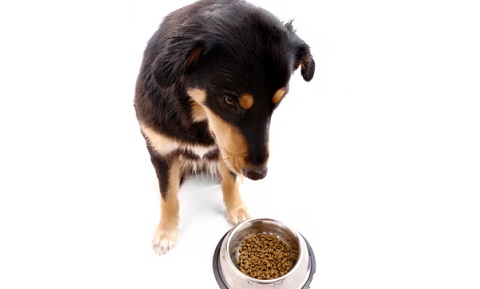 Exocrine Pancreatic Insufficiency in Dogs
