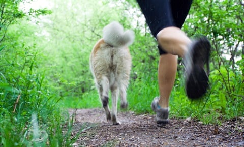 Healthy Exercise for Dogs