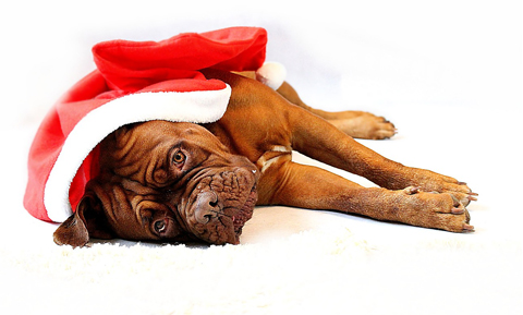 Holiday Toxins for Pets