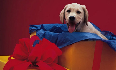 Household Hazards - Holiday Safety Tips for Dog Owners