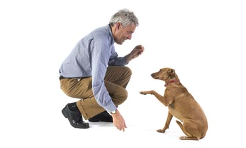 Principles of Teaching and Training Dogs