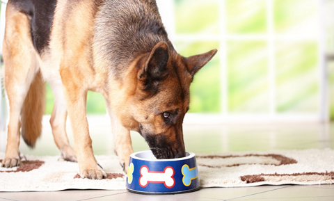 Nutrition and Dogs With Colitis