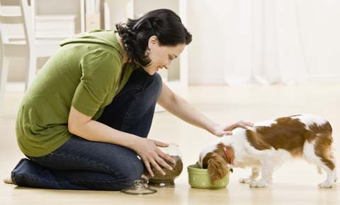 Nutrition for Dogs with Liver Disease