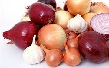 Onion, Garlic, Chive, and Leek Toxicity in Dogs