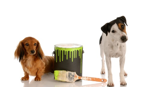 Paint and Varnish Poison Alert for Dogs and Cats