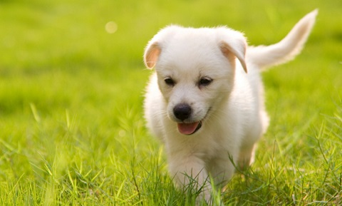 Training Your Puppy to Come, Wait, and Follow