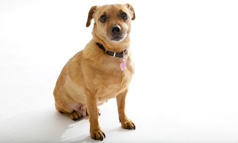 Pyometra in Dogs   VCA Animal Hospital