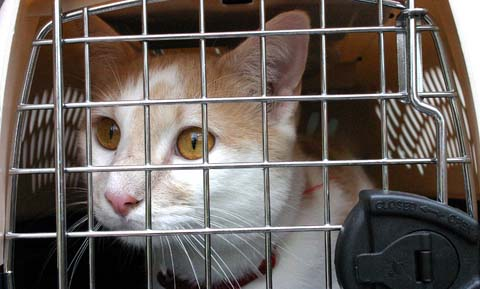 Reducing the Stress of Veterinary Visits for Cats