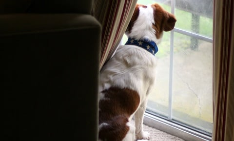 Dog Behavior Problems - Separation Anxiety in Dogs - Synopsis