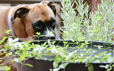 Summer Toxins to Avoid with Your Pet