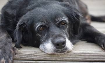Supplements for the Older Pet | VCA Animal Hospital