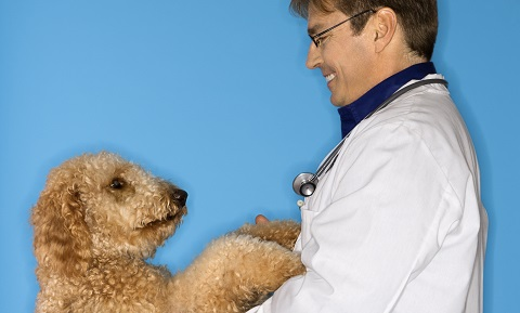 Veterinary Chiropractic Care