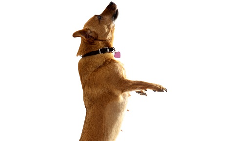 Dog Behavior Problems - Greeting Behavior, Door Charging