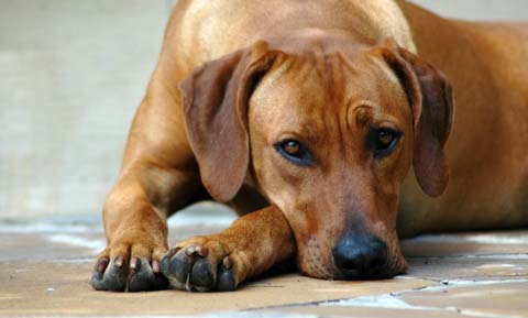 how to fix broken dog nail