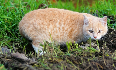 First Aid for Insect Stings in Cats | VCA Animal Hospital