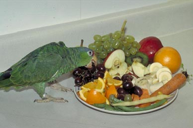 fruits_and_vegetables_in_bird_diets-1