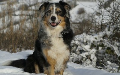Genetics Basics Coat Color Genetics In Dogs Vca Animal