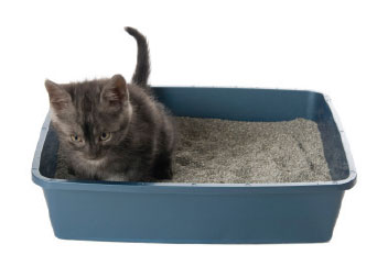Think, pissing in a litter box