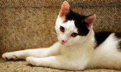 Recognizing Signs of Illness in Cats | VCA Animal Hospital