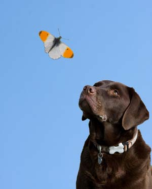 First Aid for Insect Stings in Dogs | VCA Animal Hospital