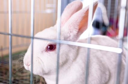 Pinworms in Rabbits | VCA Animal Hospital