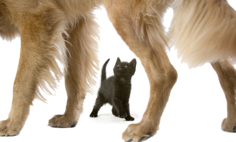 kitten_-_socialization_and_fear_prevention_2