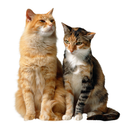 Do You Need Seperate Cat Litter Boxes For  Cats