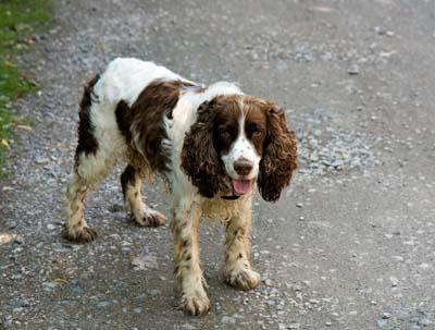 Myasthenia Gravis in Dogs | VCA Animal Hospital