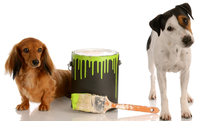 Paint and Varnish Poison Alert for Dogs and Cats | VCA